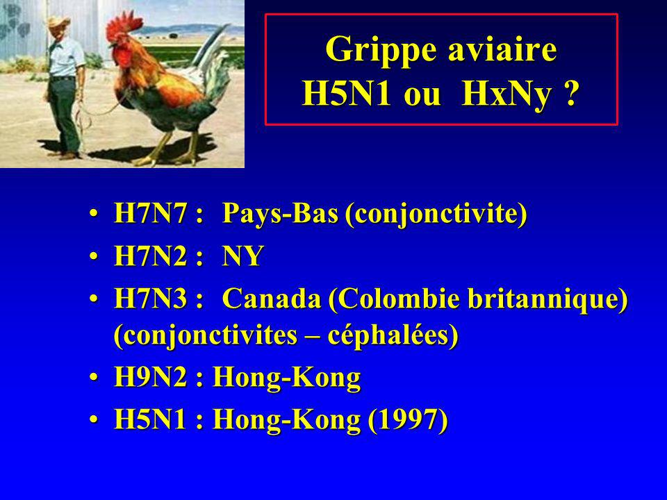 Grippe aviaire H5N1 ou HxNy ? H7N7 :Pays-Bas (conjonctivite)H7N7 :Pays-Bas (conjonctivite) H7N2 :NYH7N2 :NY H7N3 :Canada (Colombie britannique) (conjo
