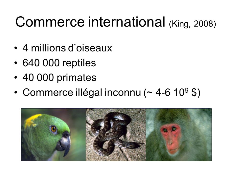 Commerce international (King, 2008) 4 millions doiseaux 640 000 reptiles 40 000 primates Commerce illégal inconnu (~ 4-6 10 9 $)