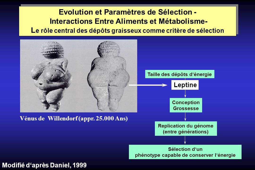 Vénus de Willendorf (appr. 25.000 Ans) Taille des dépôts dénergie Leptine Conception Grossesse Replication du génome (entre générations) Sélection dun