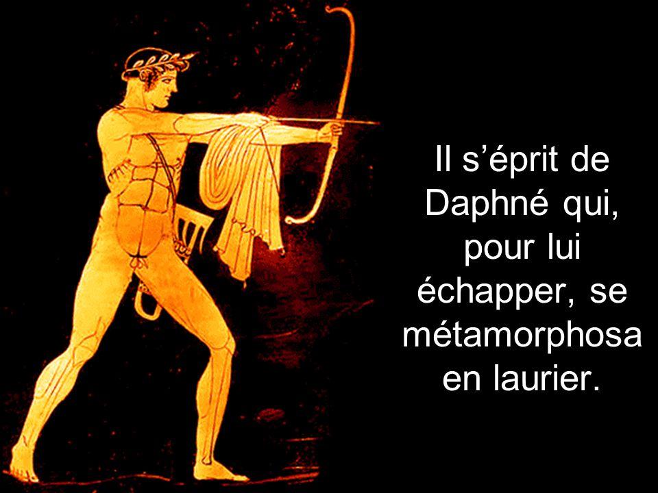 Il séprit de Daphné qui, pour lui échapper, se métamorphosa en laurier.