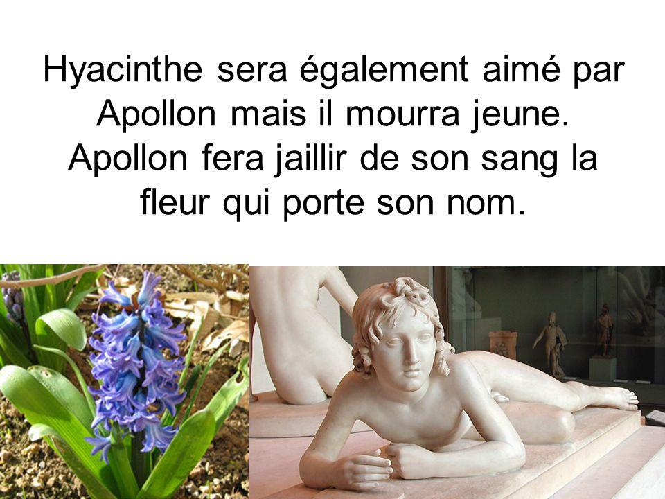Hyacinthe sera également aimé par Apollon mais il mourra jeune. Apollon fera jaillir de son sang la fleur qui porte son nom.