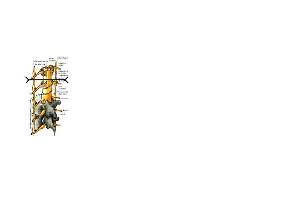 Sorte de celluleDdp (en mV) Cellules de la rétine-20 Cellules musculaires-90 Cellules β du pancréas-70 Cellules dune algue Chora australis-150 Neurone-70