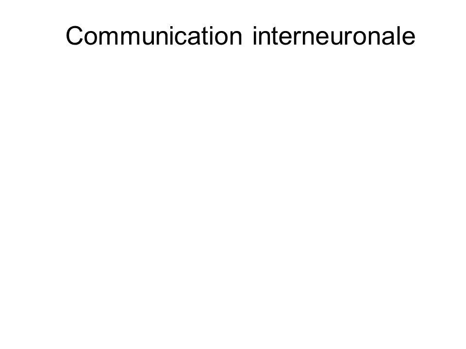 Communication interneuronale