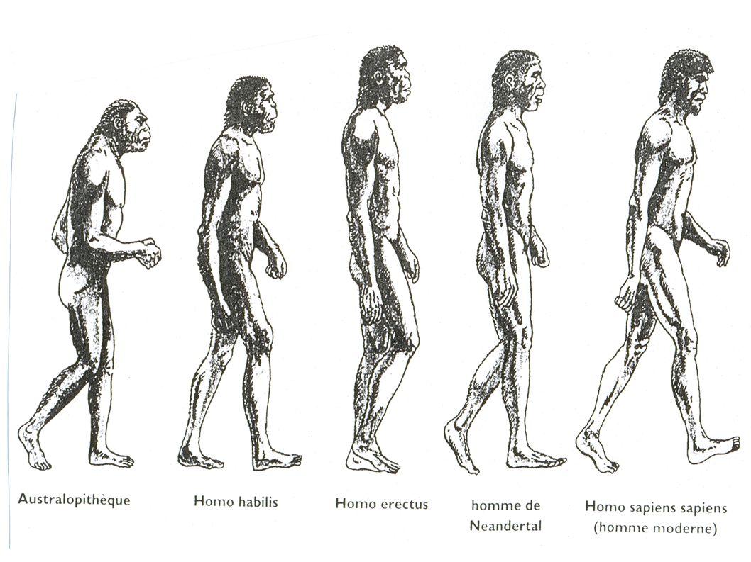Les Australopithèques De 4.1 à 2.9 millions d années Taille : 1.05 à 1.35m Poids : 30 à 45 kg Localisation : Afrique Orientale Habitat : Arboré et humide Feux : non maîtrisé