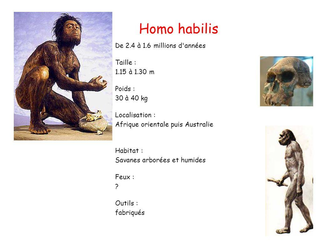 De 2.4 à 1.6 millions d années Taille : 1.15 à 1.30 m Poids : 30 à 40 kg Localisation : Afrique orientale puis Australie Habitat : Savanes arborées et humides Feux : .