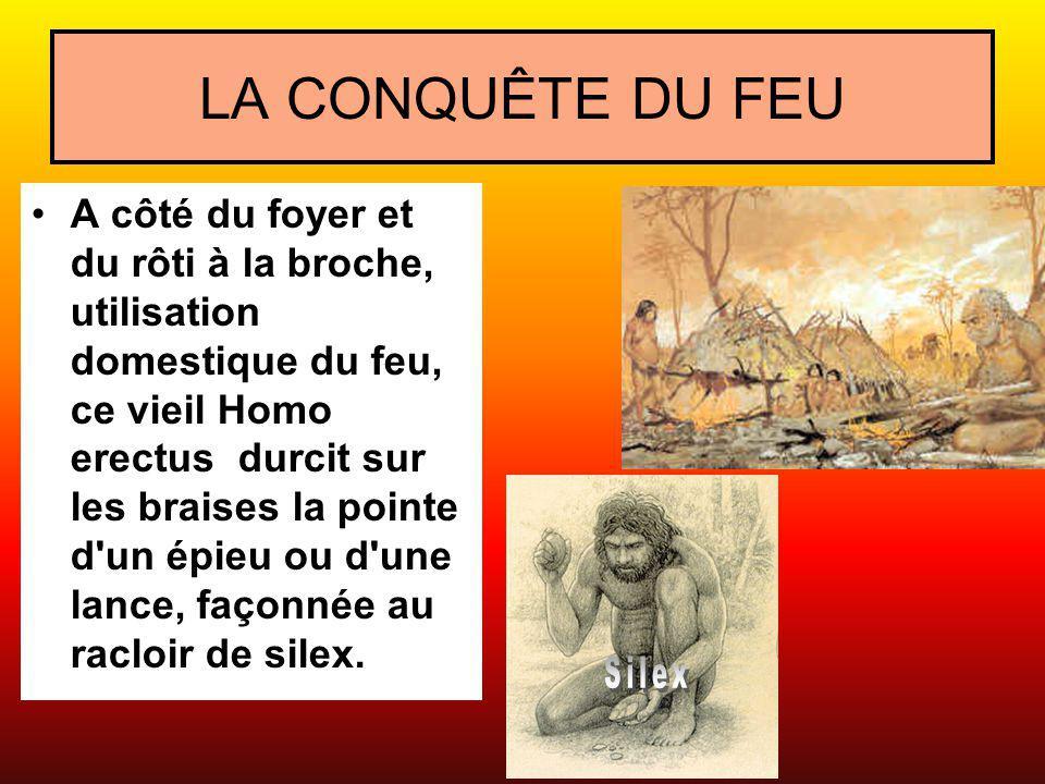 LA CONQUÊTE DU FEU A côté du foyer et du rôti à la broche, utilisation domestique du feu, ce vieil Homo erectus durcit sur les braises la pointe d'un
