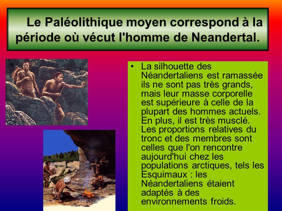 Le Paléolithique moyen correspond à la période où vécut l'homme de Neandertal. La silhouette des Néandertaliens est ramassée ils ne sont pas très gran