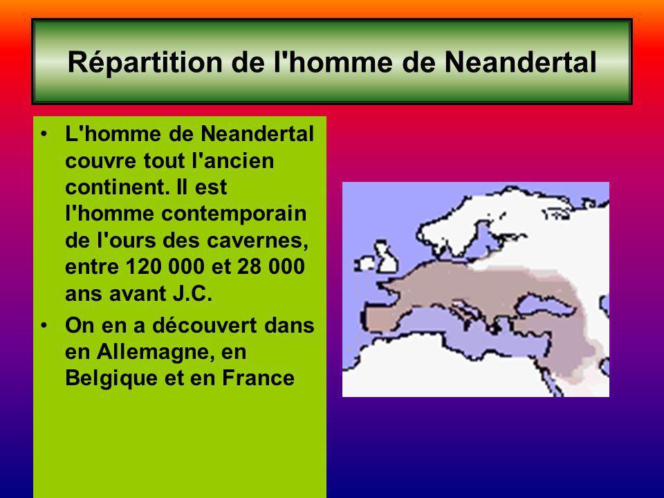 Répartition de l'homme de Neandertal L'homme de Neandertal couvre tout l'ancien continent. Il est l'homme contemporain de l'ours des cavernes, entre 1