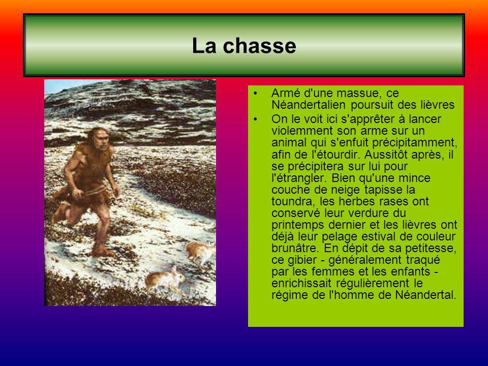 La chasse Armé d'une massue, ce Néandertalien poursuit des lièvres On le voit ici s'apprêter à lancer violemment son arme sur un animal qui s'enfuit p