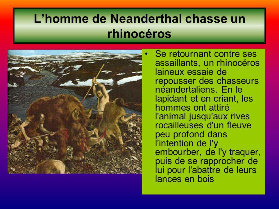 Lhomme de Neanderthal chasse un rhinocéros Se retournant contre ses assaillants, un rhinocéros laineux essaie de repousser des chasseurs néandertaliens.