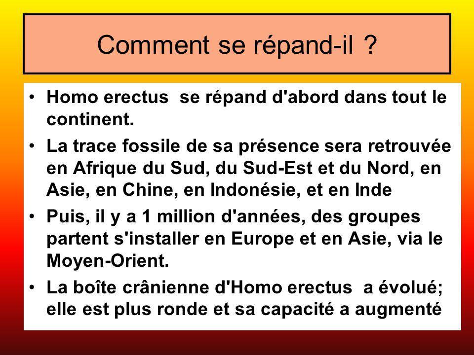 Comment se répand-il ? Homo erectus se répand d'abord dans tout le continent. La trace fossile de sa présence sera retrouvée en Afrique du Sud, du Sud