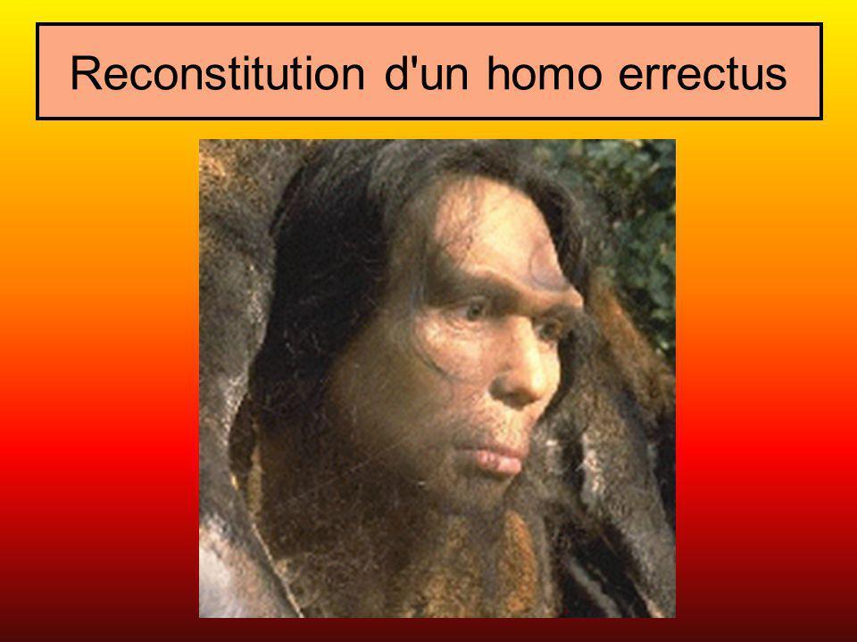 LA CONQUÊTE DU FEU A côté du foyer et du rôti à la broche, utilisation domestique du feu, ce vieil Homo erectus durcit sur les braises la pointe d un épieu ou d une lance, façonnée au racloir de silex.