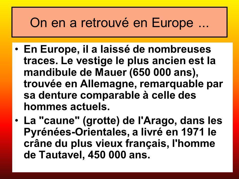 On en a retrouvé en Europe... En Europe, il a laissé de nombreuses traces. Le vestige le plus ancien est la mandibule de Mauer (650 000 ans), trouvée