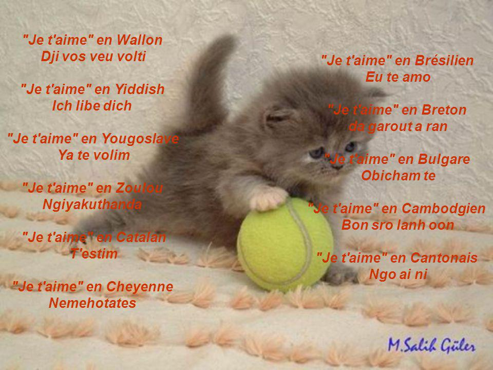 Je t aime en Chichewas Ndimakukonda Je t aime en Chinois Wo ay ni Je t aime en Bosniaque Volim te Je t aime en Thaï (formel) Ch an rak khun (femme vers homme) Phom rak khun (homme vers femme) Phom-ruk-koon Khoa raak thoe (affection, amour, tendresse) Je t aime en Tunisien Ha eh bakn