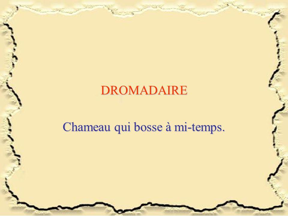 DROMADAIRE Chameau qui bosse à mi-temps.