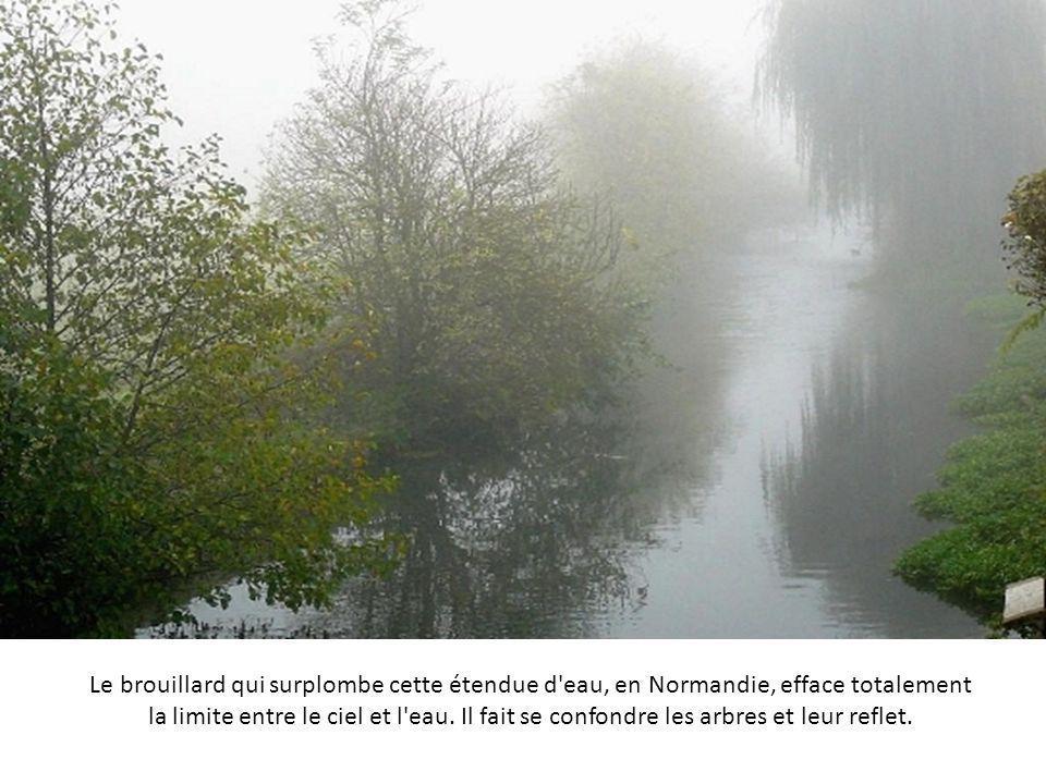 Le brouillard est déjà bien installé sur ce pré breton lorsque le soleil se lève. En avant-plan, le cheval semble se matérialiser depuis la vapeur d'e