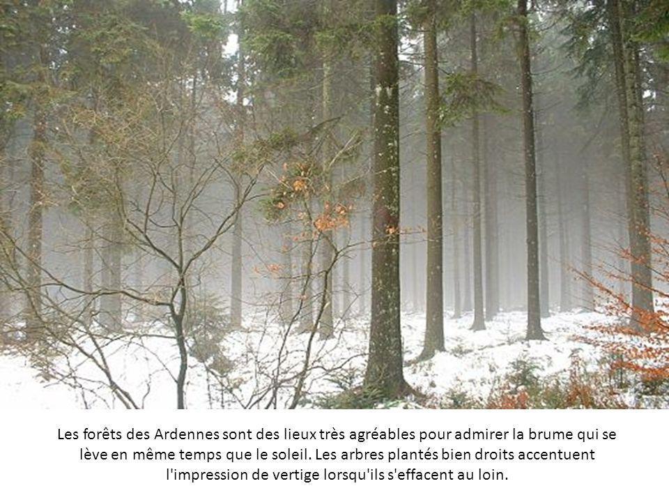 Les premiers rayons de soleil d'un matin de janvier accentuent la brume irréelle qui surplombe l'étang de Plounérin, dans les Côtes d'Armor.