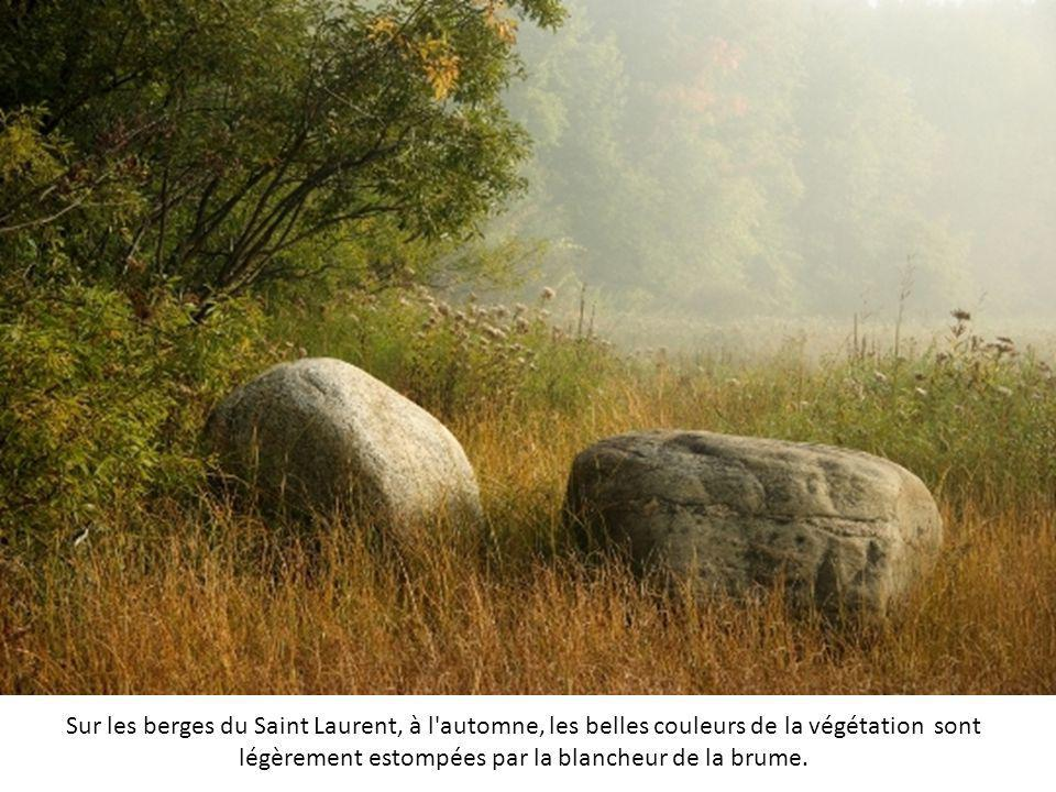 Les forêts des Ardennes sont des lieux très agréables pour admirer la brume qui se lève en même temps que le soleil. Les arbres plantés bien droits ac