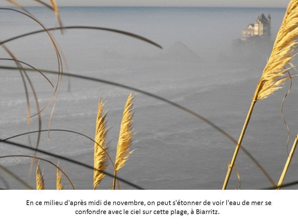 Sur les berges du Saint Laurent, à l'automne, les belles couleurs de la végétation sont légèrement estompées par la blancheur de la brume.