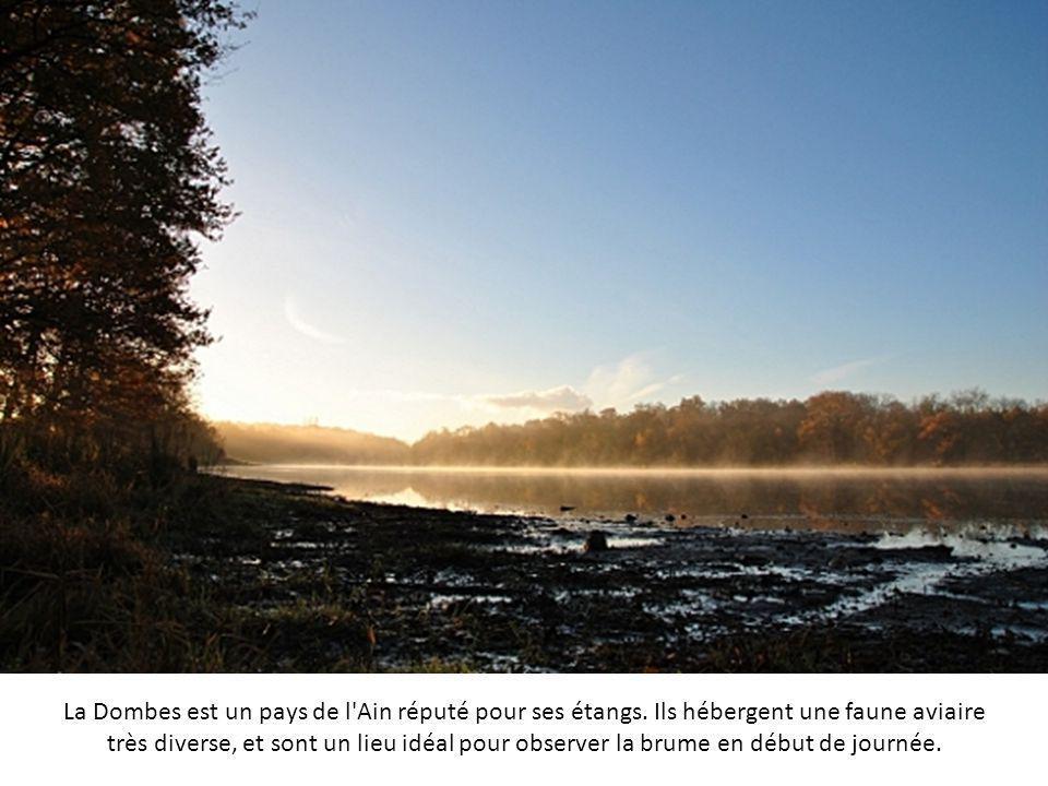 La rivière Sainte-Anne est située au cœur d'un bassin naturel dont la faune est protégée, le parc des Laurentides au Canada. On y trouve une trentaine