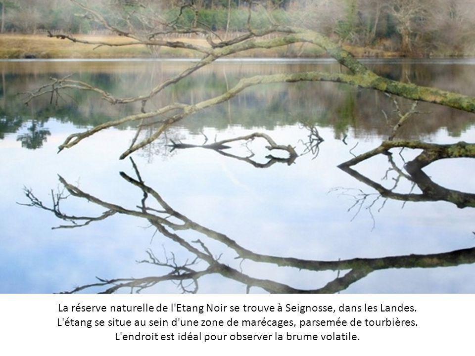 Ce lac artificiel est le plus grand de Bretagne, et ses rives irrégulières encadrées par la forêt séduisent les amoureux de nature. Au lever du jour,