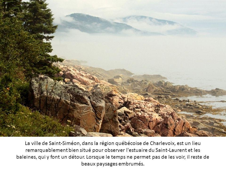 La réserve naturelle de l'Etang Noir se trouve à Seignosse, dans les Landes. L'étang se situe au sein d'une zone de marécages, parsemée de tourbières.