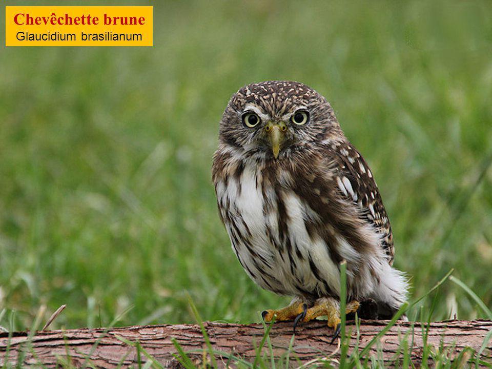 Voilà, nous sommes le 9 juin 2014, il est 11:23heures… Et tu glandes… Images du Web Chanson : Lonely Drifter Karen The owl moans low 09/06/201466