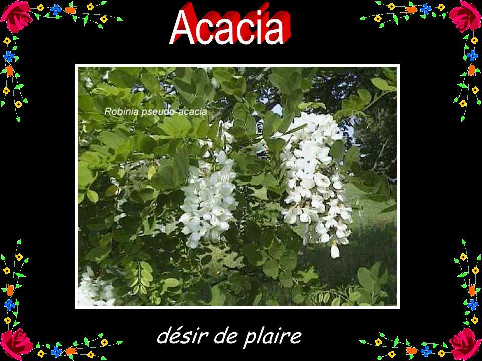 Images Diverses prises sur le web Conception : Huguette huguette32@hotmail.com Juillet 2005 Musique : Nikos IGNATIADIS Le début