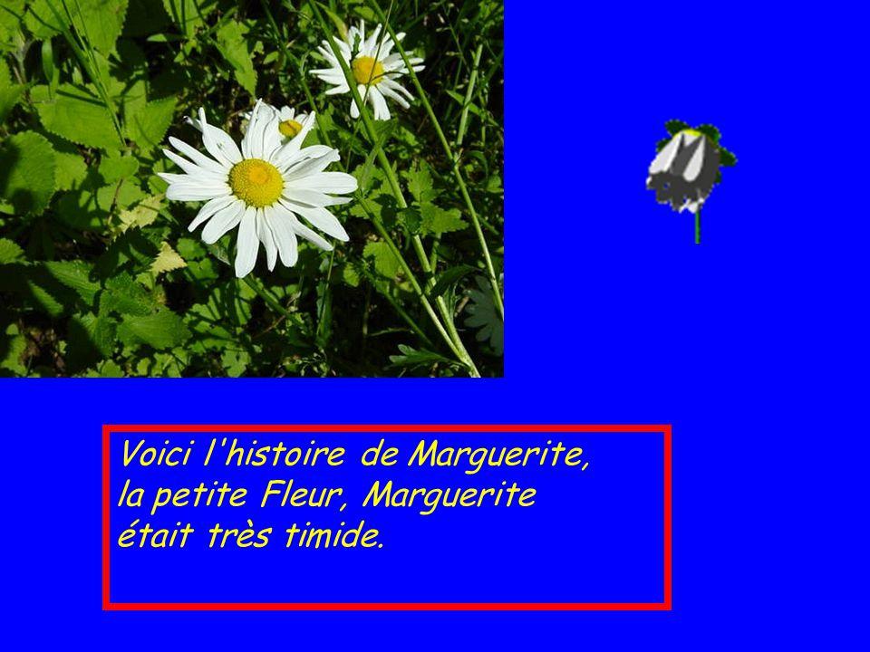 Voici l histoire de Marguerite, la petite Fleur, Marguerite était très timide.