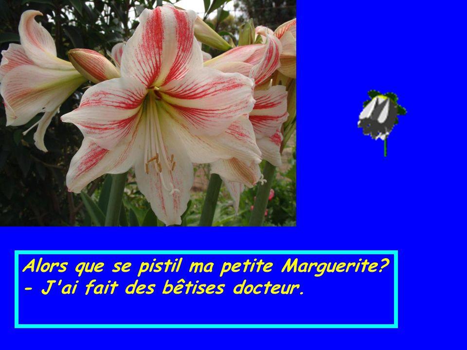 Elle se rendit chez le Dr Bouquet, Corolle Bouquet. - Bonsoir Docteur. - Bonsoir Marguerite