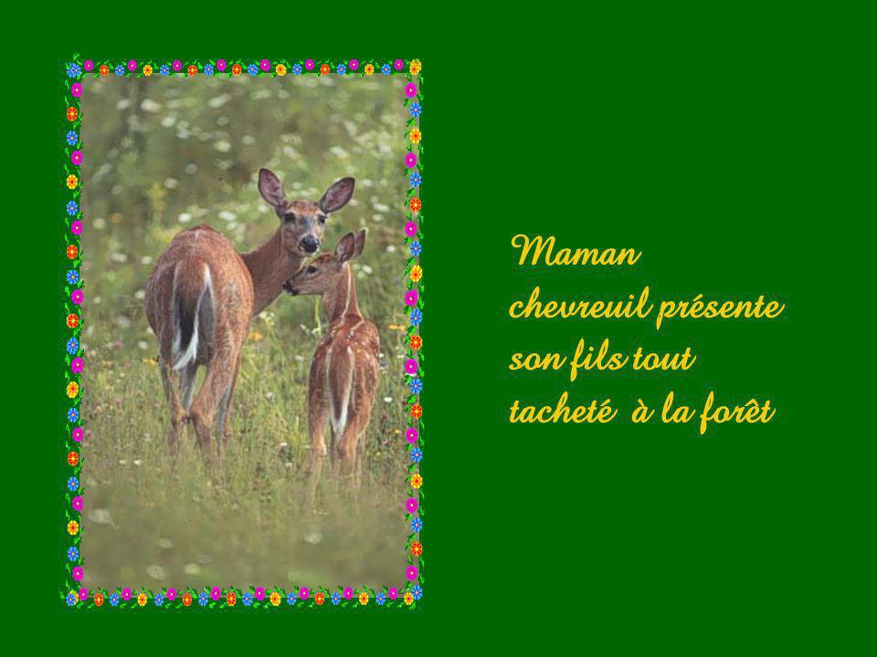 Maman chevreuil présente son fils tout tacheté à la forêt