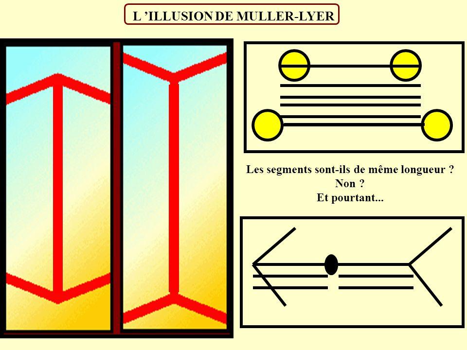 LES DIFFERENTS TYPES D ILLUSION Illusions portant sur la forme Illusions portant sur les contours Illusions portant sur le mouvement Illusions portant