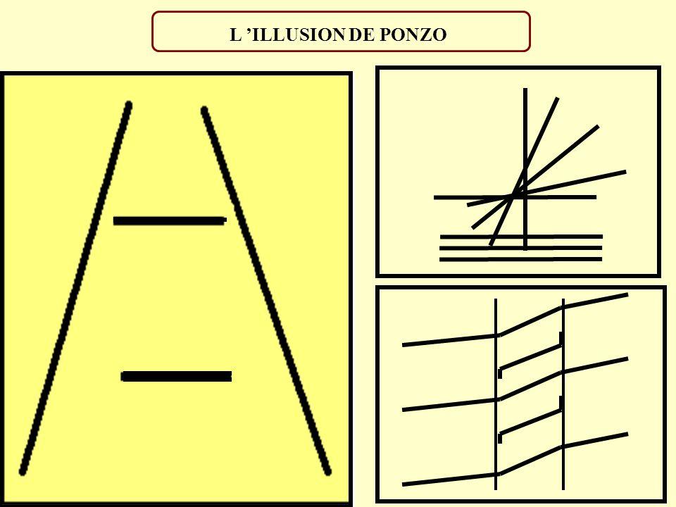L ILLUSION DE MULLER-LYER Les segments sont-ils de même longueur ? Non ? Et pourtant...