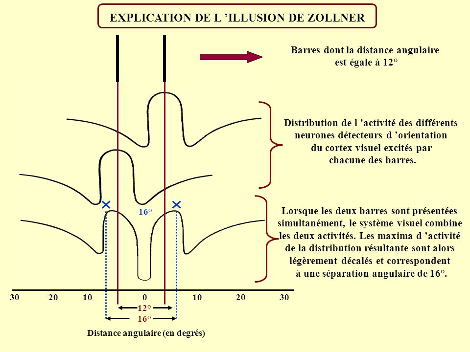 L ILLUSION DE ZOLLNER