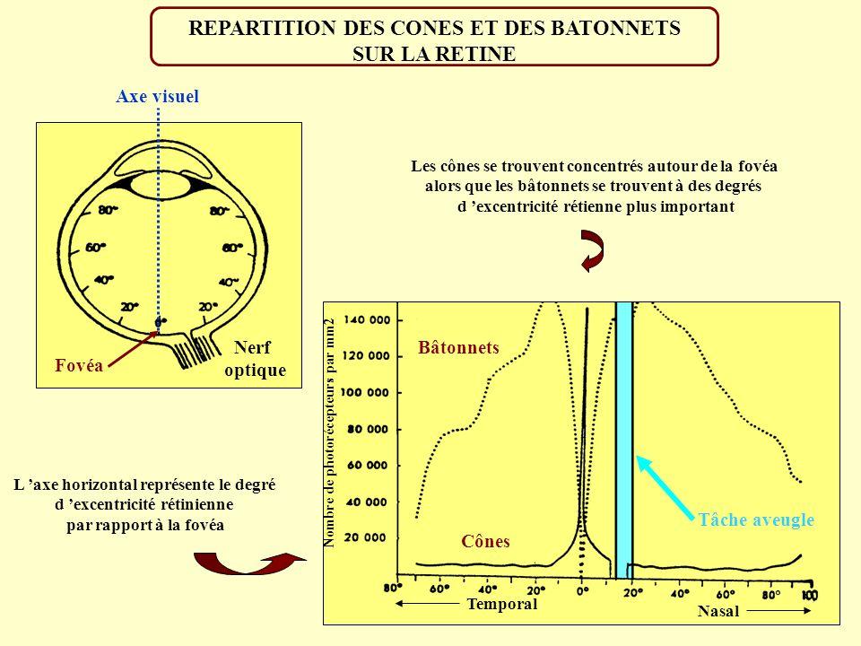 REPARTITION DES CONES ET DES BATONNETS SUR LA RETINE Axe visuel Fovéa Nerf optique L axe horizontal représente le degré d excentricité rétinienne par rapport à la fovéa Nombre de photorécepteurs par mm2 Temporal Nasal Les cônes se trouvent concentrés autour de la fovéa alors que les bâtonnets se trouvent à des degrés d excentricité rétienne plus important Bâtonnets Cônes Tâche aveugle Cônes