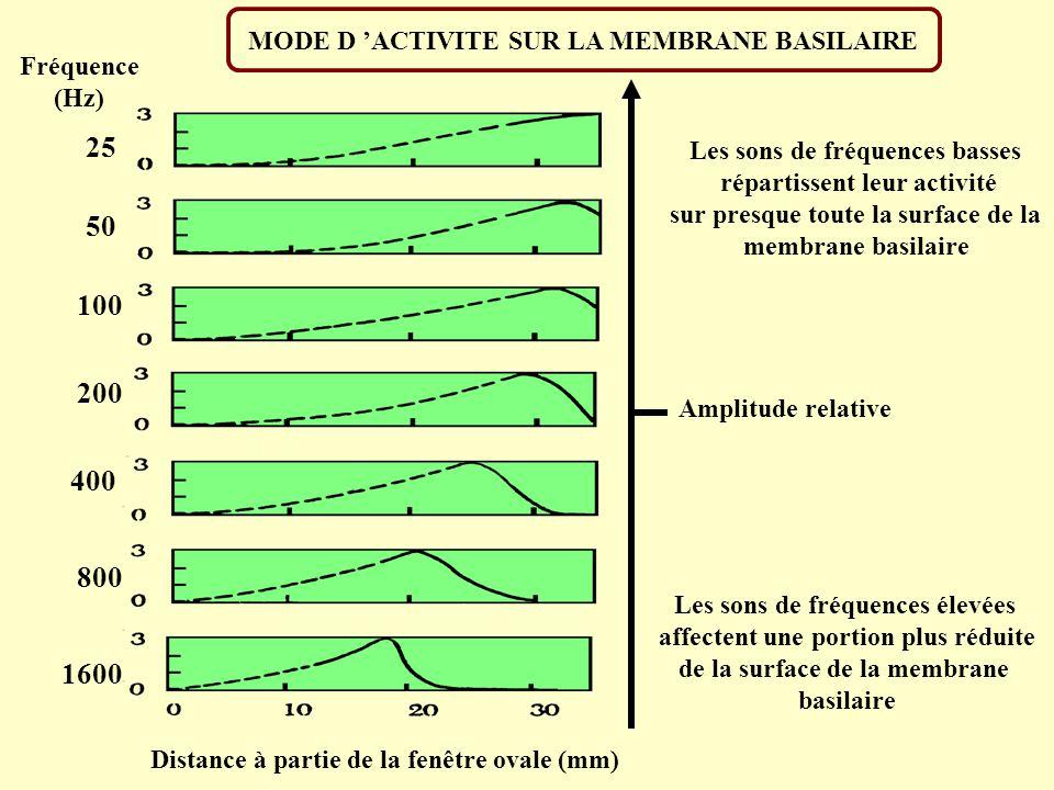 COMMENT UN SON PEUT EN CACHER UN AUTRE ? FREQUENCE (Hz) 450700100016002500450700100016002500 Bruit intense Bruit modéré Bruit faible Bruit modéré Brui