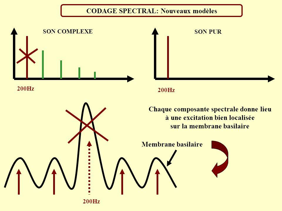CODAGE SPECTRALE: Ancien modèle Représentation de la propagation d une onde sonore le long de la membrane basilaire BASE APEX La position du maximum d