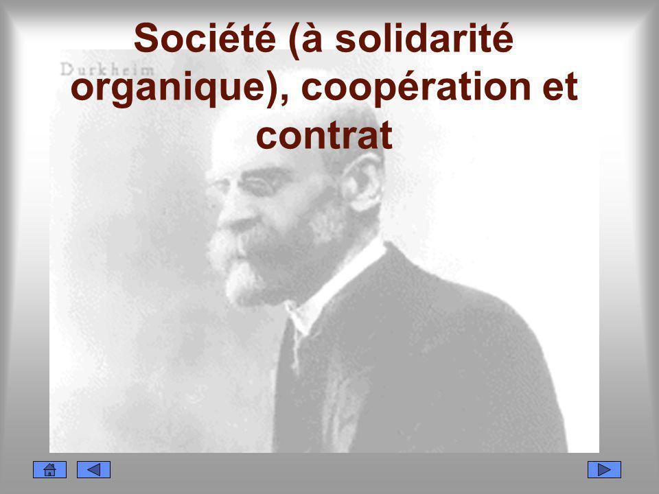 Société (à solidarité organique), coopération et contrat