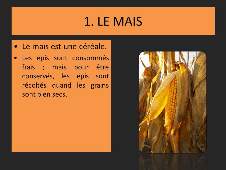 1.LE MAIS Le maïs est une céréale.