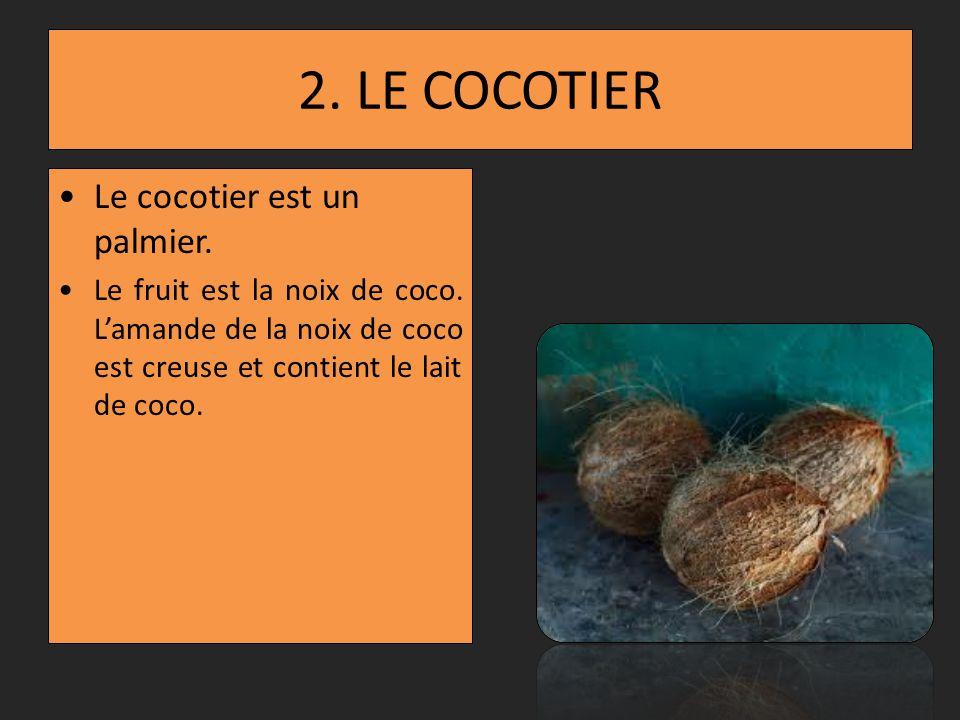 2.LE COCOTIER Le cocotier est un palmier. Le fruit est la noix de coco.