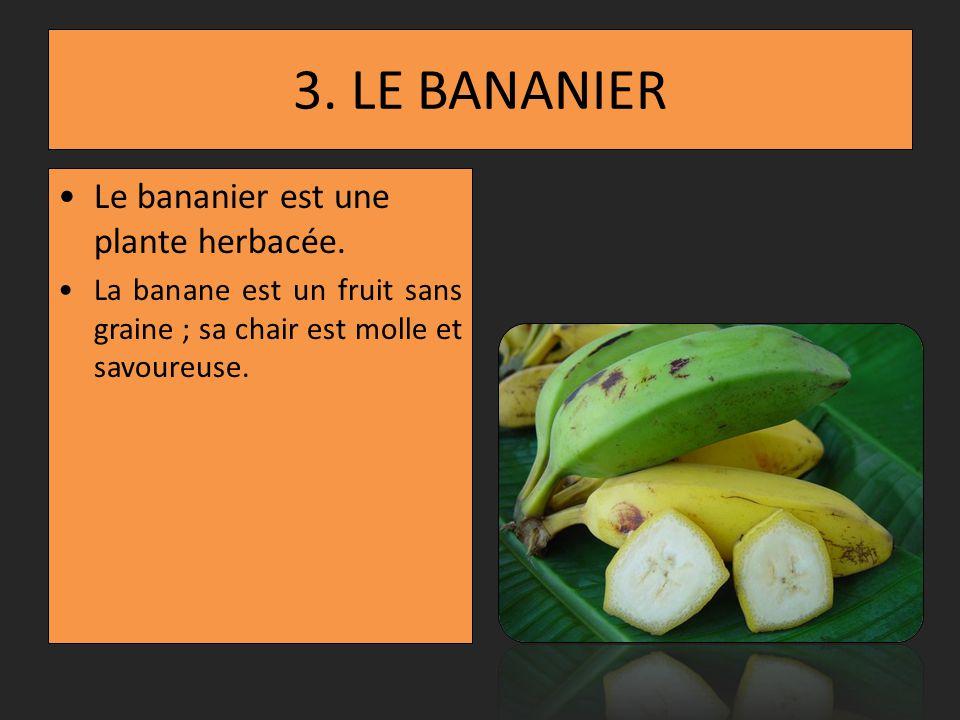 2. LE COCOTIER Le cocotier est un palmier. Le fruit est la noix de coco. Lamande de la noix de coco est creuse et contient le lait de coco.