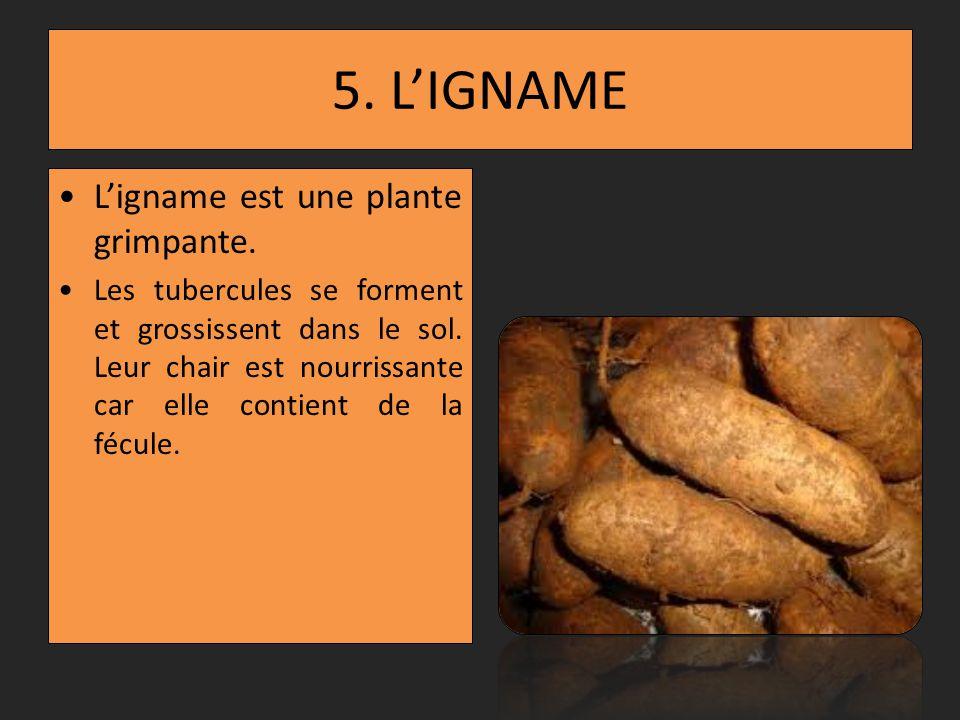 4. LANANAS Lananas est une plante herbacée.