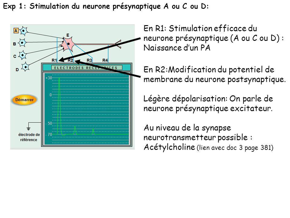 Exp 1: Stimulation du neurone présynaptique A ou C ou D: En R1: Stimulation efficace du neurone présynaptique (A ou C ou D) : Naissance dun PA En R2:M