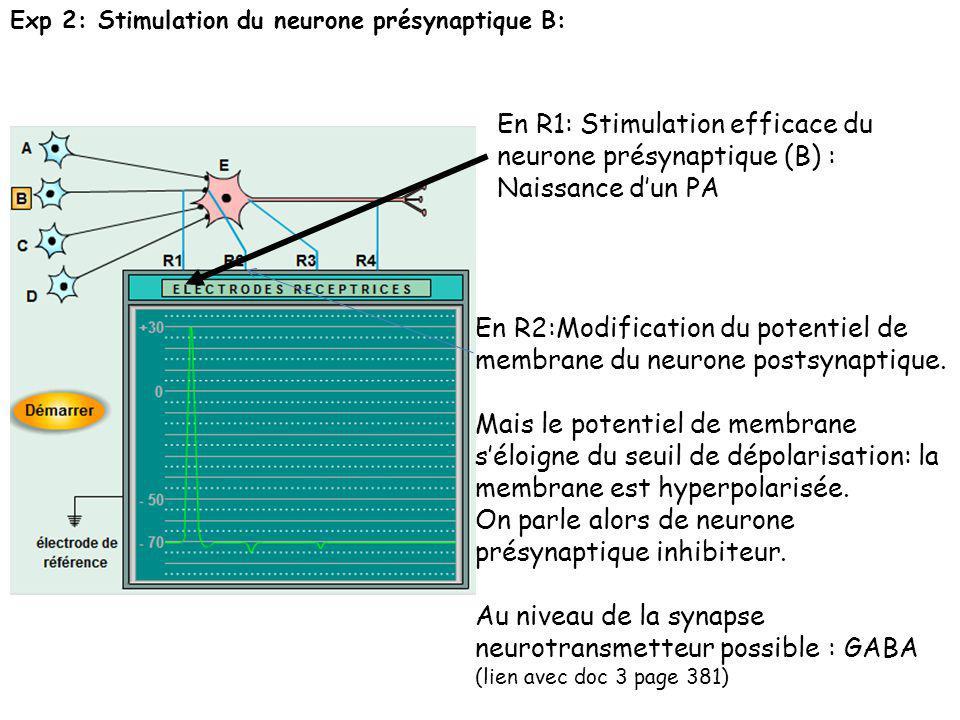 Exp 2: Stimulation du neurone présynaptique B: En R1: Stimulation efficace du neurone présynaptique (B) : Naissance dun PA En R2:Modification du poten