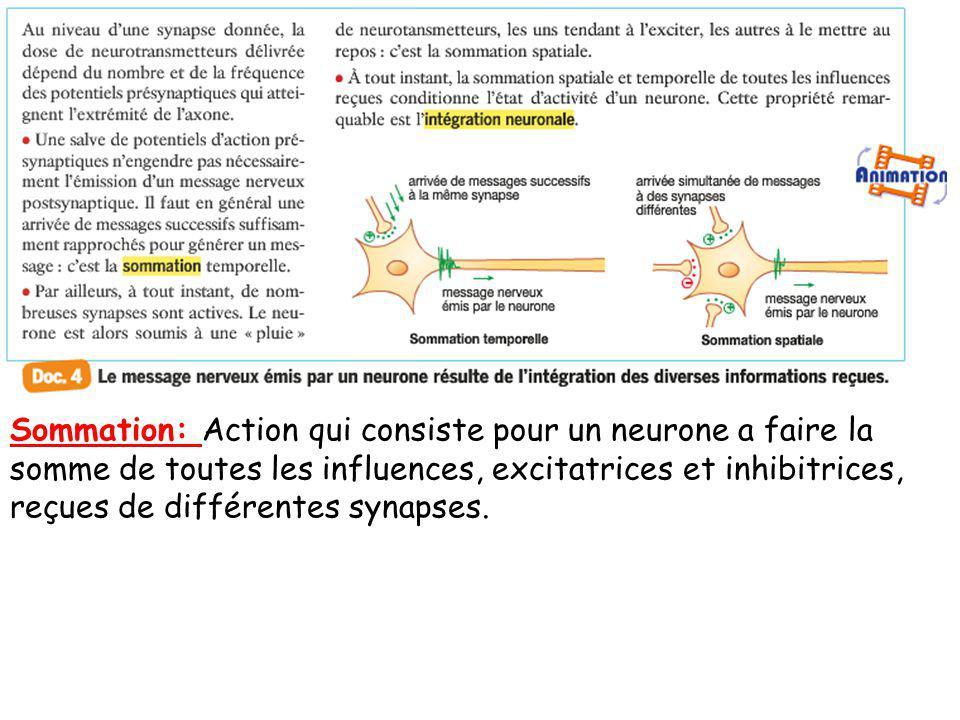 Sommation: Action qui consiste pour un neurone a faire la somme de toutes les influences, excitatrices et inhibitrices, reçues de différentes synapses