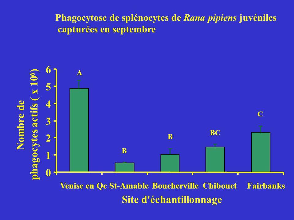Phagocytose de splénocytes de Rana pipiens juvéniles capturées en septembre 0 1 2 3 4 5 6 Venise en QcSt-AmableBouchervilleChibouetFairbanks Site d'éc