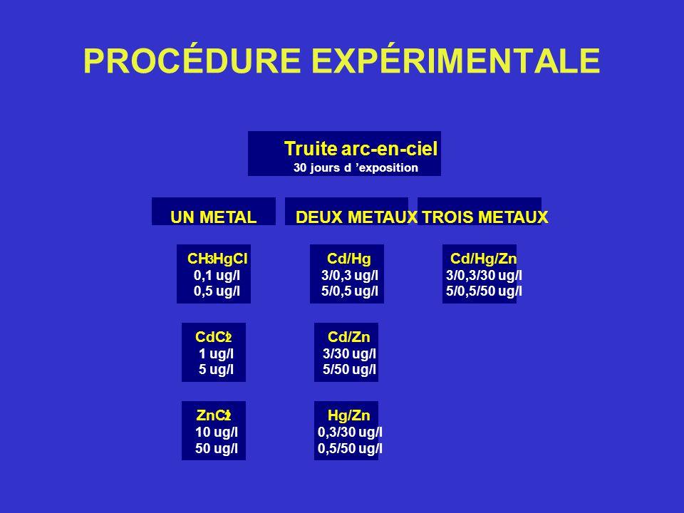 PROCÉDURE EXPÉRIMENTALE ZnCl 2 10 ug/l 50 ug/l CdCl 2 1 ug/l 5 ug/l Hg/Zn 0,3/30 ug/l 0,5/50 ug/l Cd/Zn 3/30 ug/l 5/50 ug/l CH 3 HgCl 0,1 ug/l 0,5 ug/