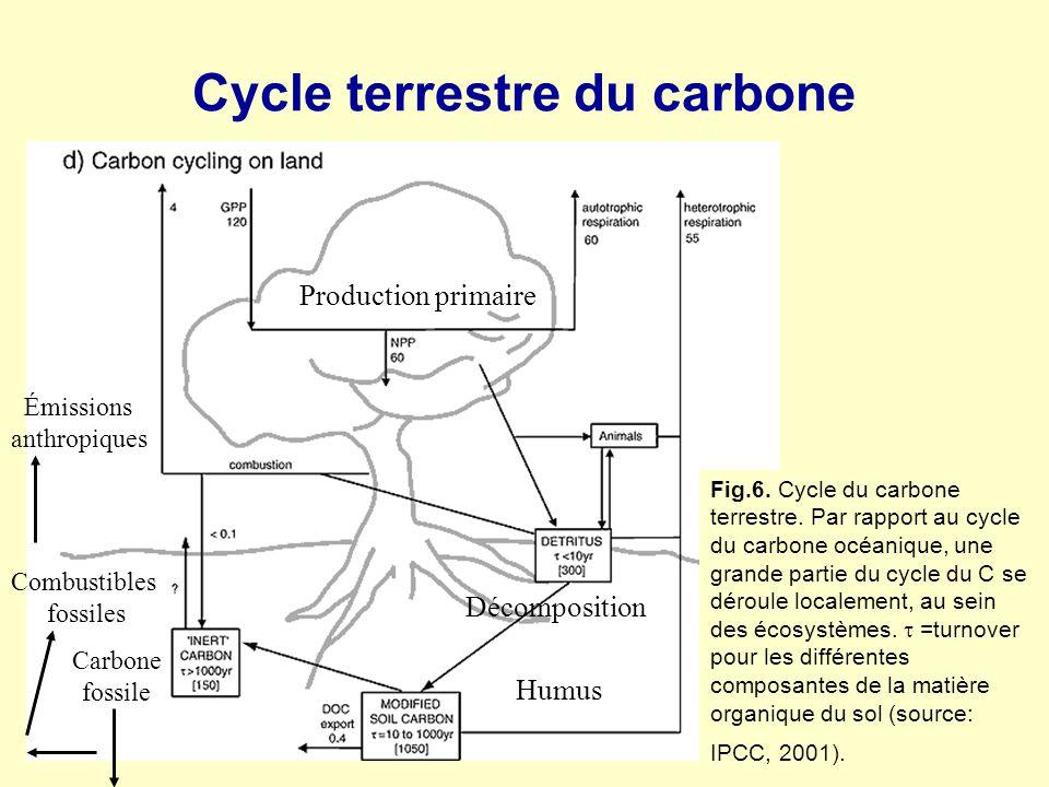 Cycle terrestre du carbone Fig.6. Cycle du carbone terrestre. Par rapport au cycle du carbone océanique, une grande partie du cycle du C se déroule lo
