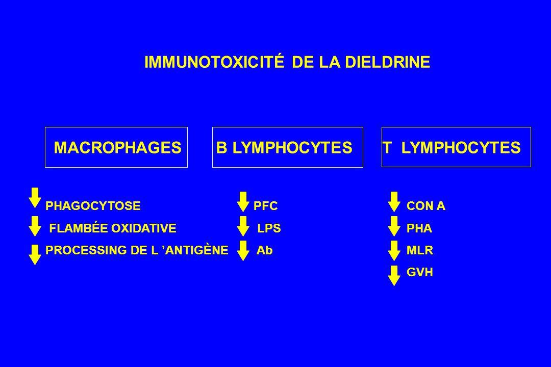 IMMUNOTOXICITÉ DE LA DIELDRINE MACROPHAGES B LYMPHOCYTES T LYMPHOCYTES PHAGOCYTOSE FLAMBÉE OXIDATIVE PROCESSING DE L ANTIGÈNE PFC LPS Ab CON A PHA MLR GVH