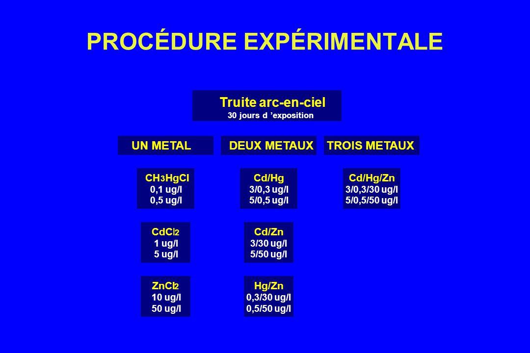 PROCÉDURE EXPÉRIMENTALE ZnCl 2 10 ug/l 50 ug/l CdCl 2 1 ug/l 5 ug/l Hg/Zn 0,3/30 ug/l 0,5/50 ug/l Cd/Zn 3/30 ug/l 5/50 ug/l CH 3 HgCl 0,1 ug/l 0,5 ug/l UN METAL Cd/Hg 3/0,3 ug/l 5/0,5 ug/l DEUX METAUX Cd/Hg/Zn 3/0,3/30 ug/l 5/0,5/50 ug/l TROIS METAUX Truite arc-en-ciel 30 jours d exposition